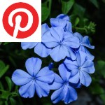 Picture related to the article overlaid with the Pinterest logo.