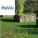 Picture related to the article overlaid with the MeWe logo.