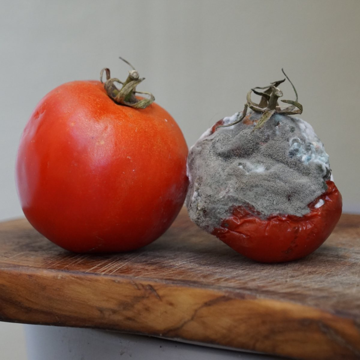 Moldy tomato next to a healthy one.