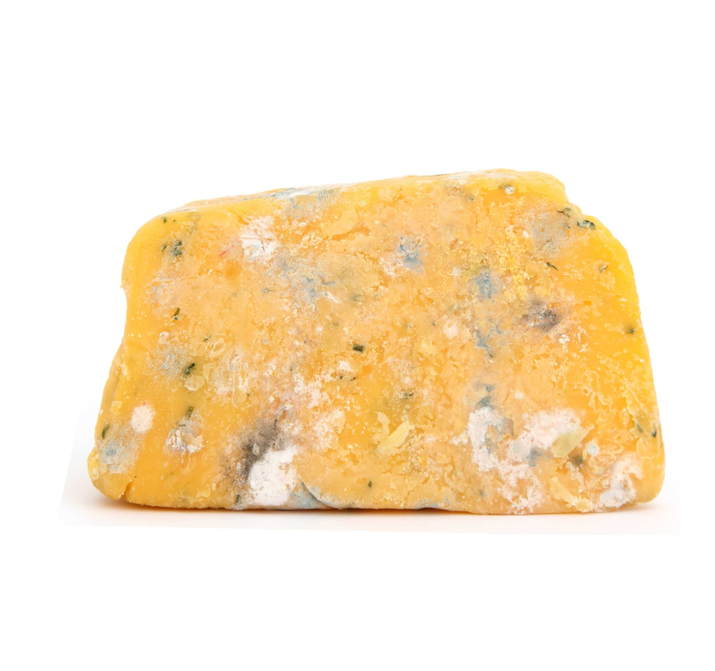 Block of moldy cheese.