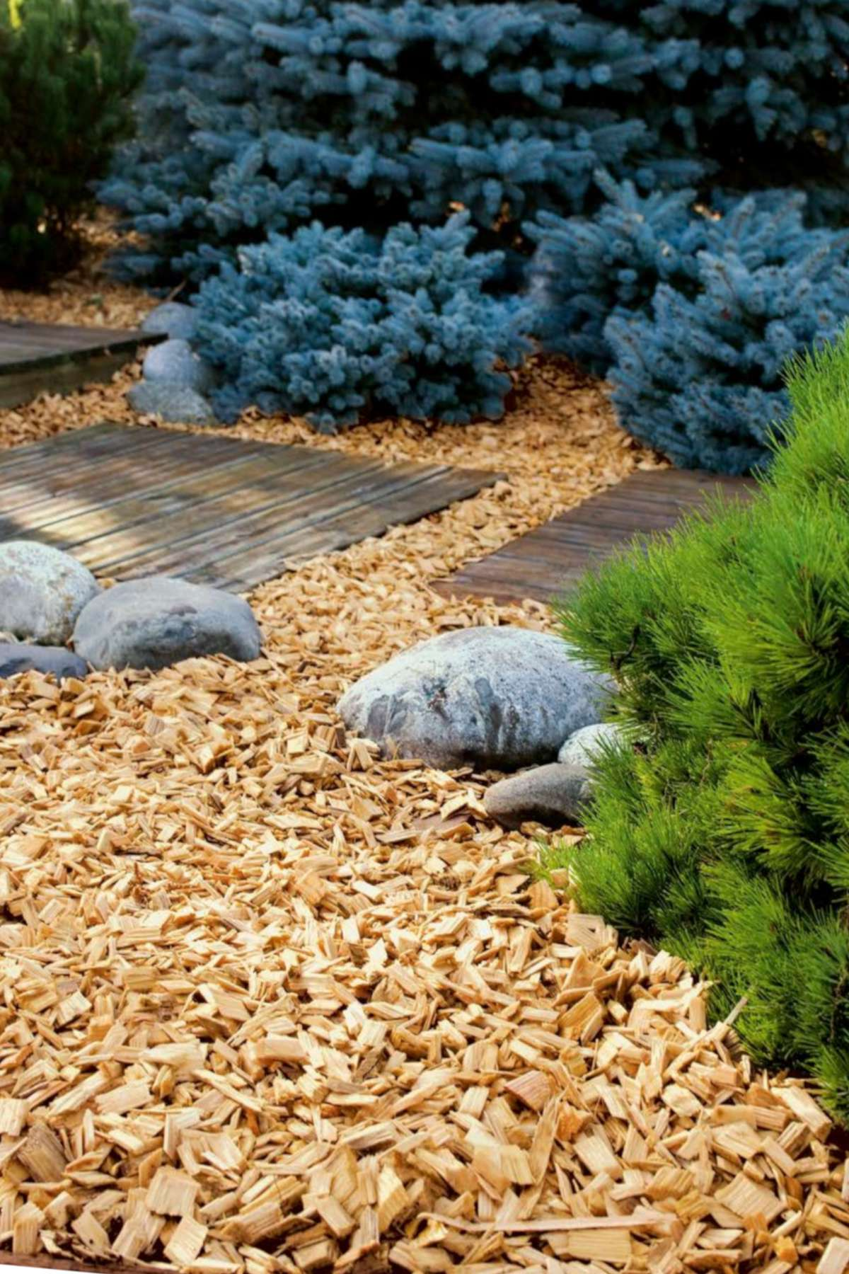 Wood chip mulch with stones, juniper and walkway