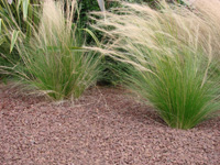 Mulch guidelines, mineral mulch