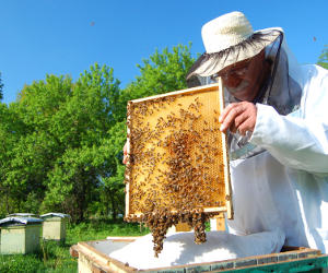 A beehive in your garden