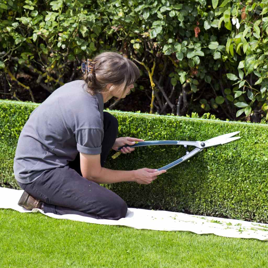 Trimming hedges, the right time