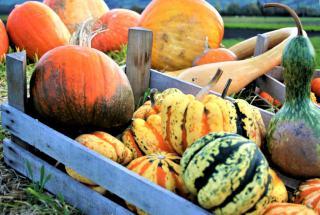Colocynth ornamental pumpkins in a crate.