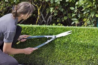 Using a guide makes pruning straighter