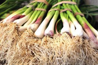 Bunch of bunching onion
