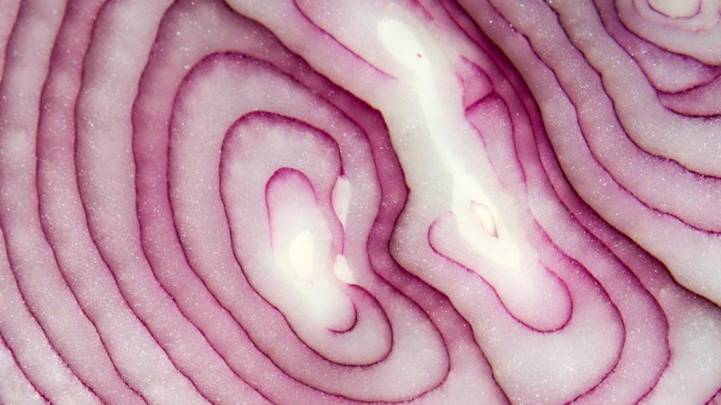 Slice of an onion close up