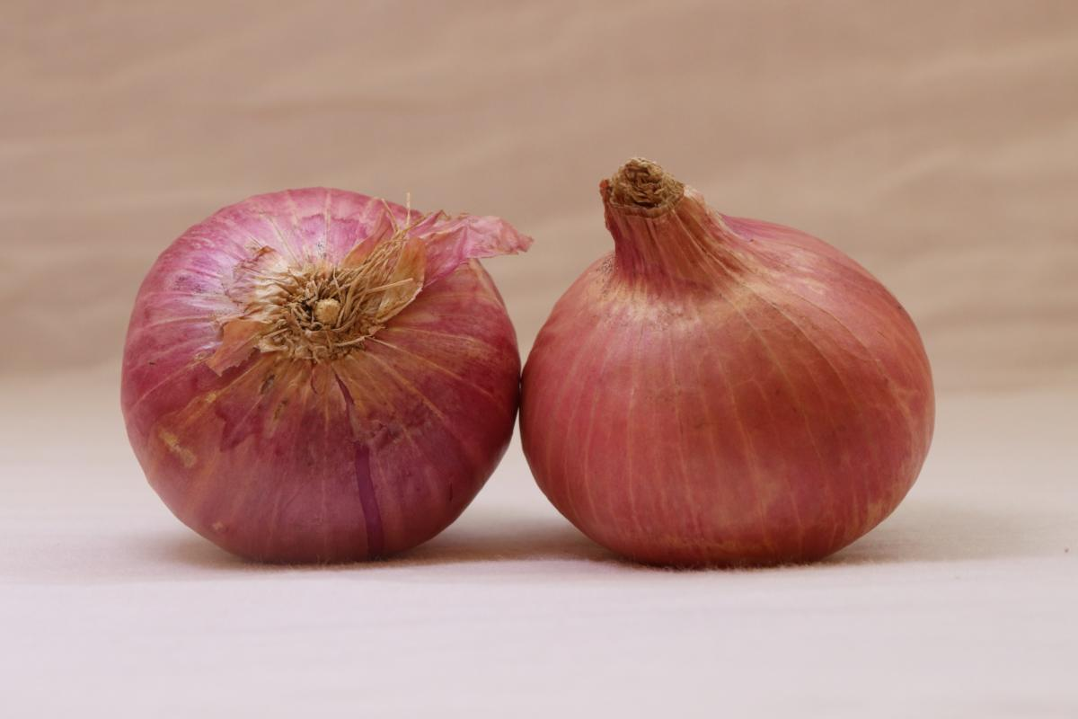 Two onions on a cloth