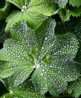 Leaf covered in rain