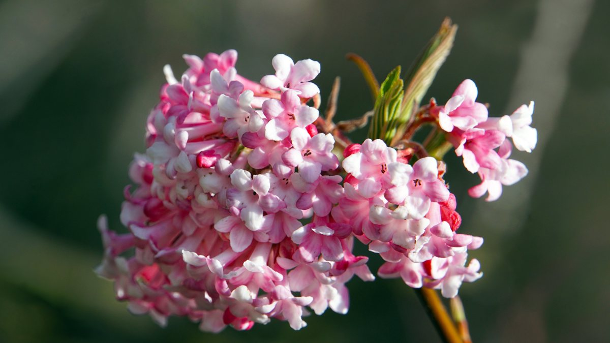 Winter flowers that are fragrant