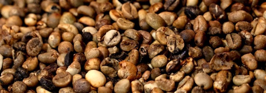 Beans half-roasted
