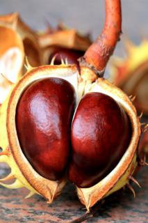 Horse chestnuts can help treat hemorrhoids.