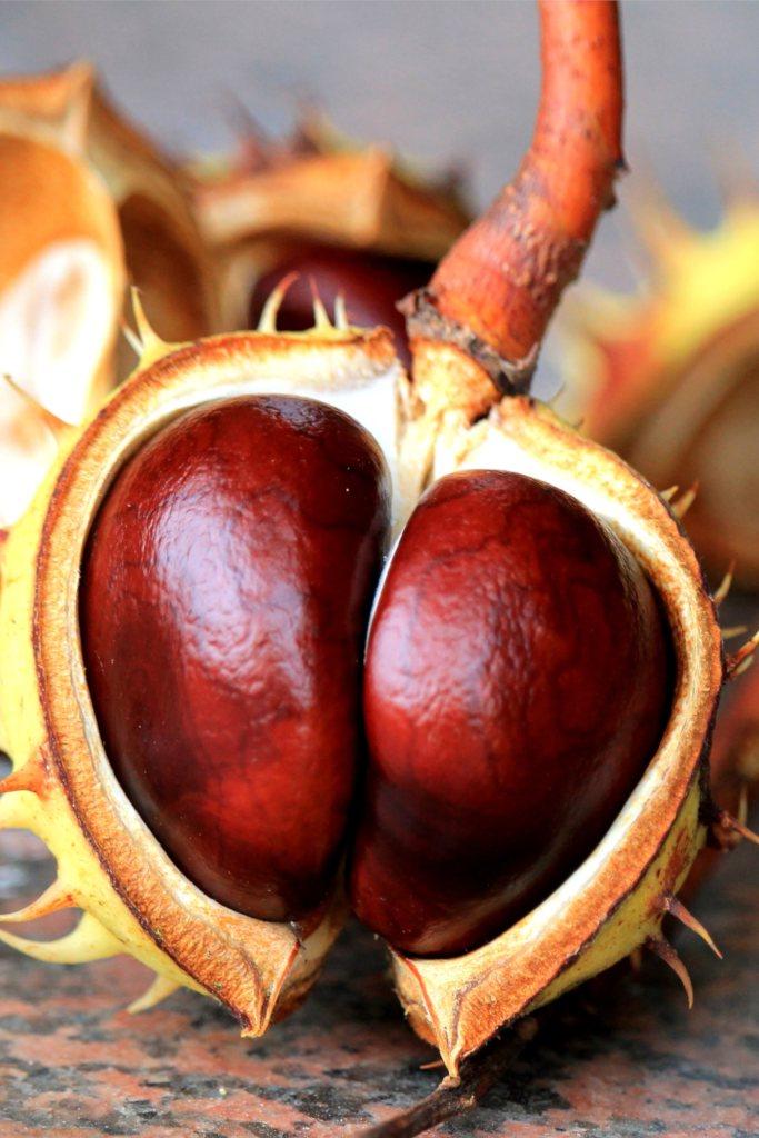 Hemorrhoids, how to treat them naturally