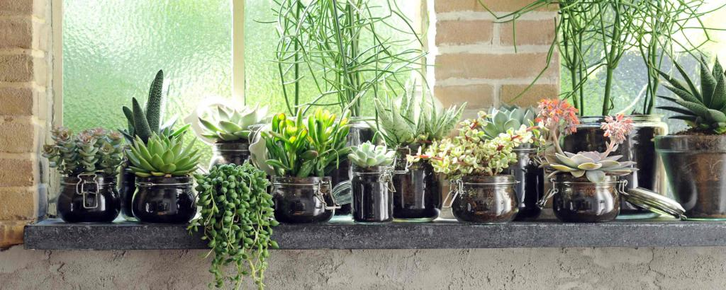 Succulent collection on a windowsill