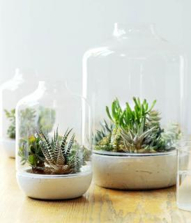 Easy to care for succulents in a glass jar