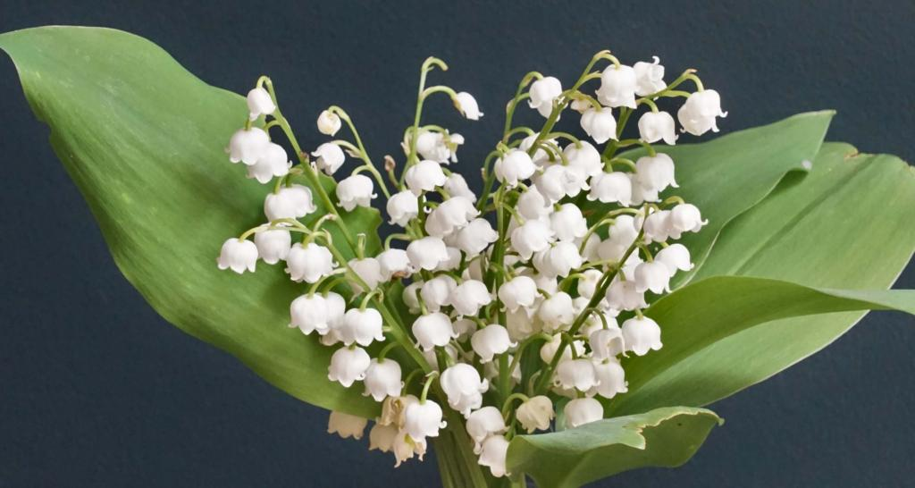 Bouquet of lily of the valley.