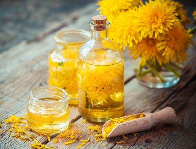 Dandelion health benefits and therapeutic value