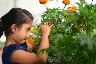 A child that likes gardening with marigolds