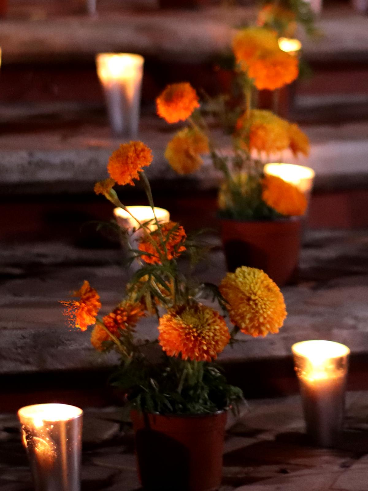 Chrysanthemum with candles in a cemetary