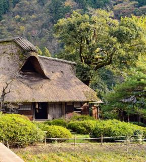 A thatch-roofed house with plants selected to thrive in that climate.