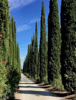 Cypress alleyway
