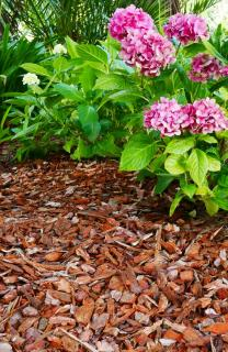 Plant mulch covers a garden bed