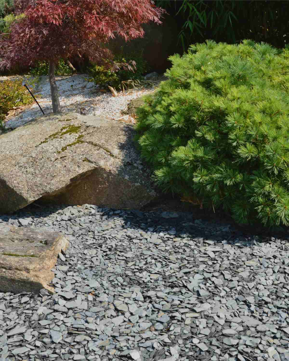 Slate mulch, perfect for acid-loving plants and shrubs
