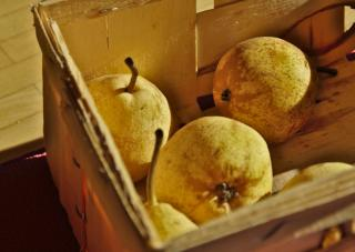 Pear harvest in a tray for keeping over winter