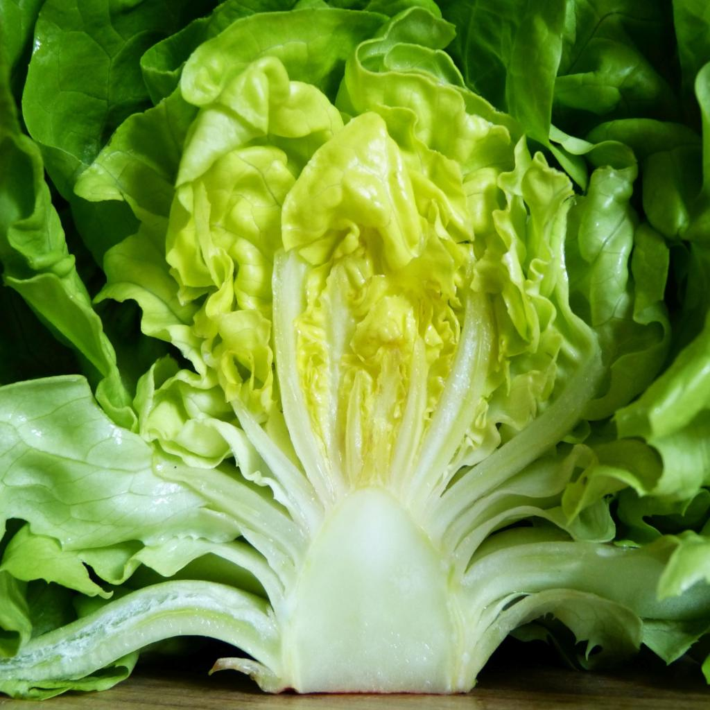 Benefits of lettuce appear with this head of lettuce sliced in half.