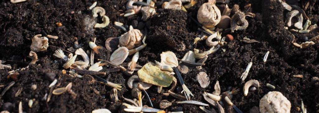 Seeds of different types of flowers sown with broadcast sowing.