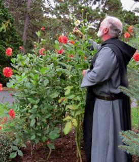 Monk tending dahlias in a cloister garden
