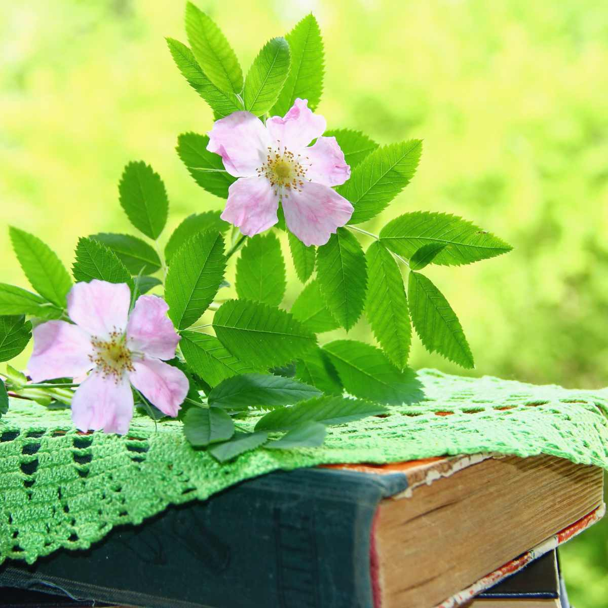 Books show health benefits of dogrose.