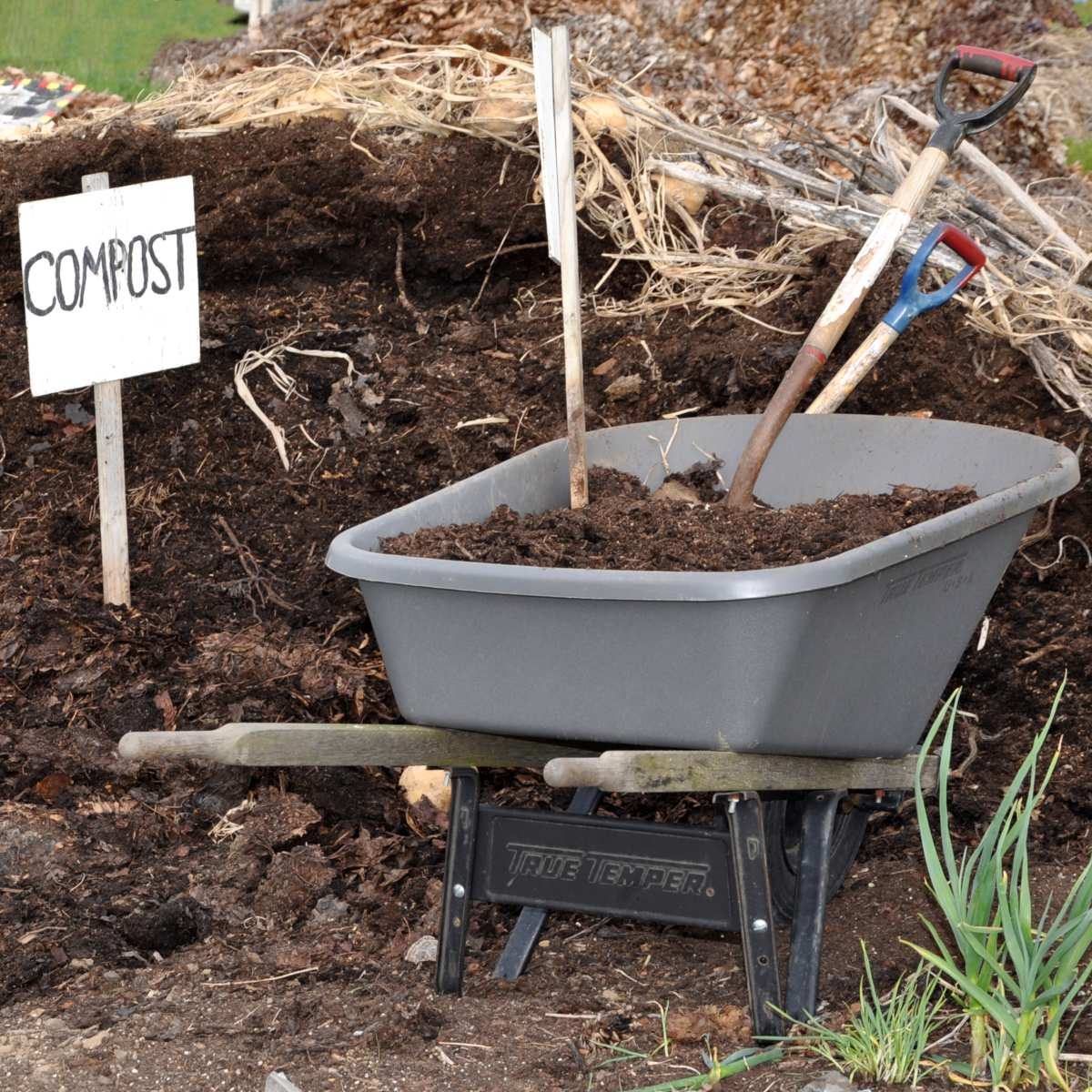 What is compost exactly? Uses and purpose