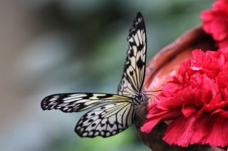 Red flower attracting a butterfly in a garden.