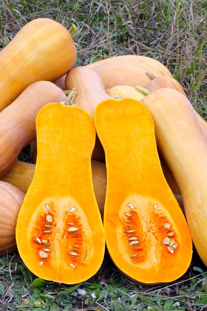 Sliced butternut harvest