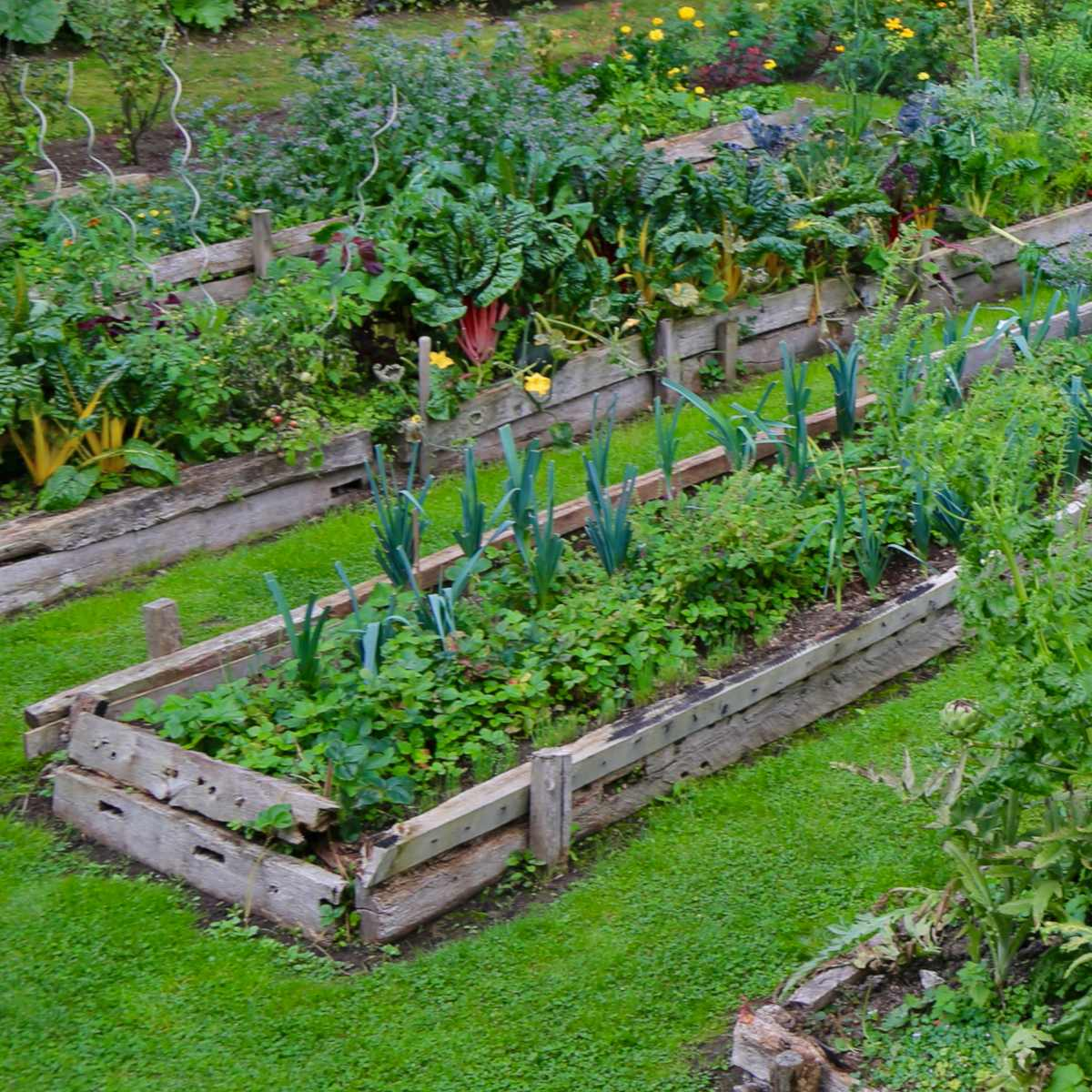 Raised beds with companion planting