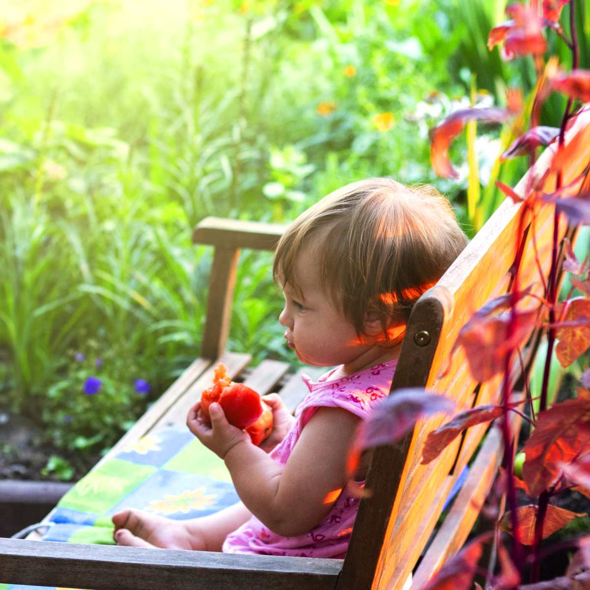 Easy-growing tomatoes is child's play, like this toddler savoring a tomato on a bench.