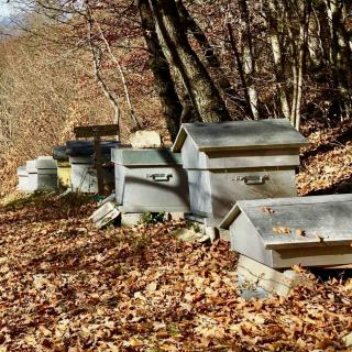 Hives at the side of a garden