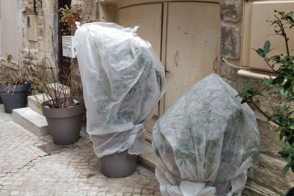 hivernage plantes