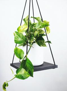 Pothos in white pot on stone slab