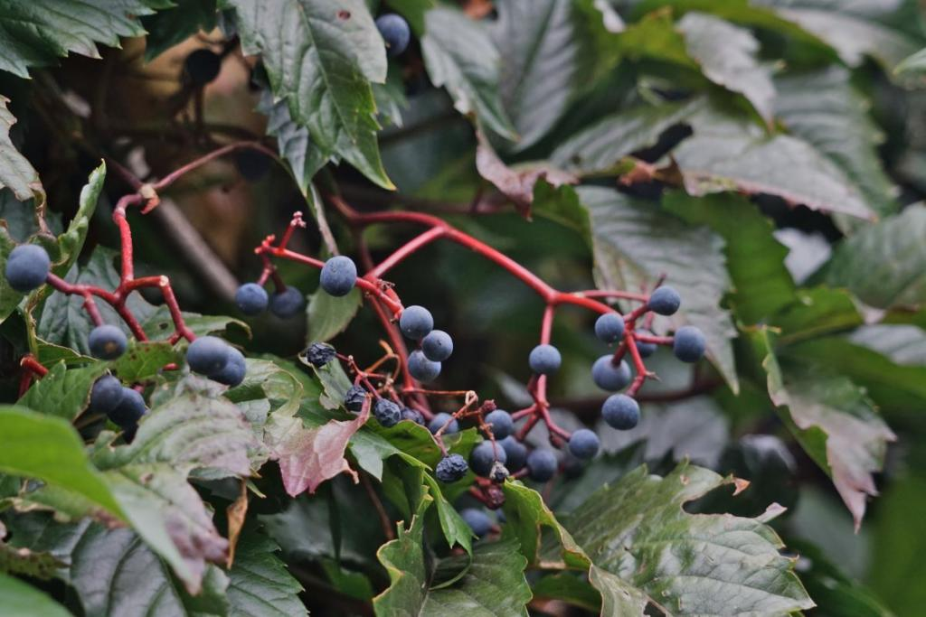 Fruits, though beautiful, are poisonous