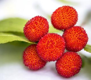 Fruits and leaf of the arbutus unedo tree.