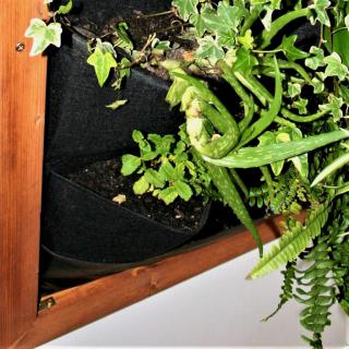Indoor living plant frame with a few plants growing in it.