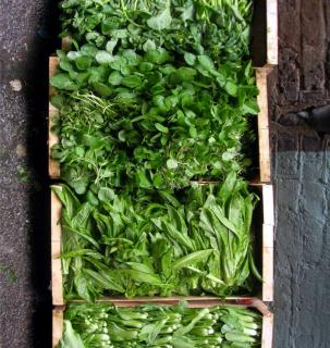 Lettuce, watercress and other greens that can be sown and harvested all year round, in four crates.