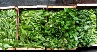 Four seasons greens in crates