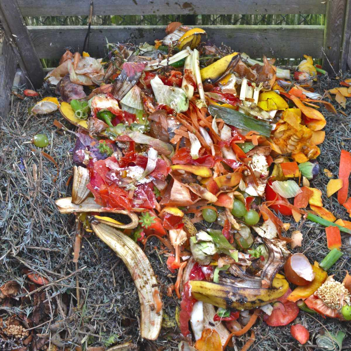 Uses of compost prepared from kitchen scraps