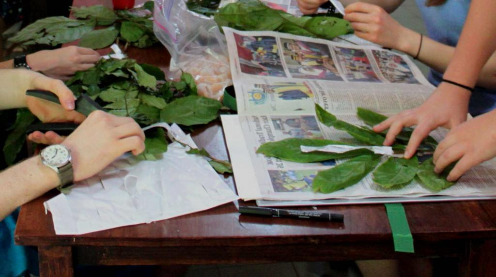 Leaves selected and set to dry in newspaper pages.