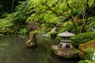 Pond with Japanese ornaments and plants for a great meditative impact