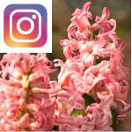 Picture related to the article overlaid with the Instagram logo.